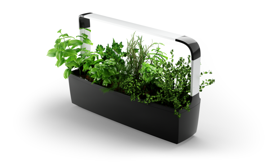 NEW T12 Kitchen Garden - black